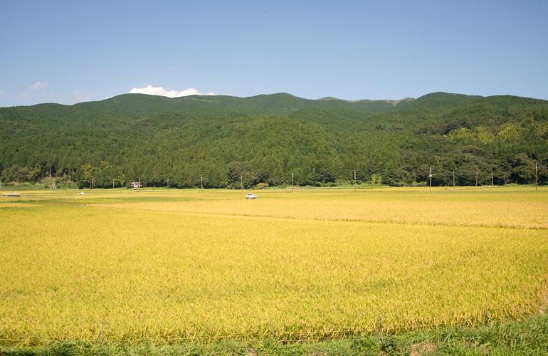 稲藁シーズンが近づいてきました!